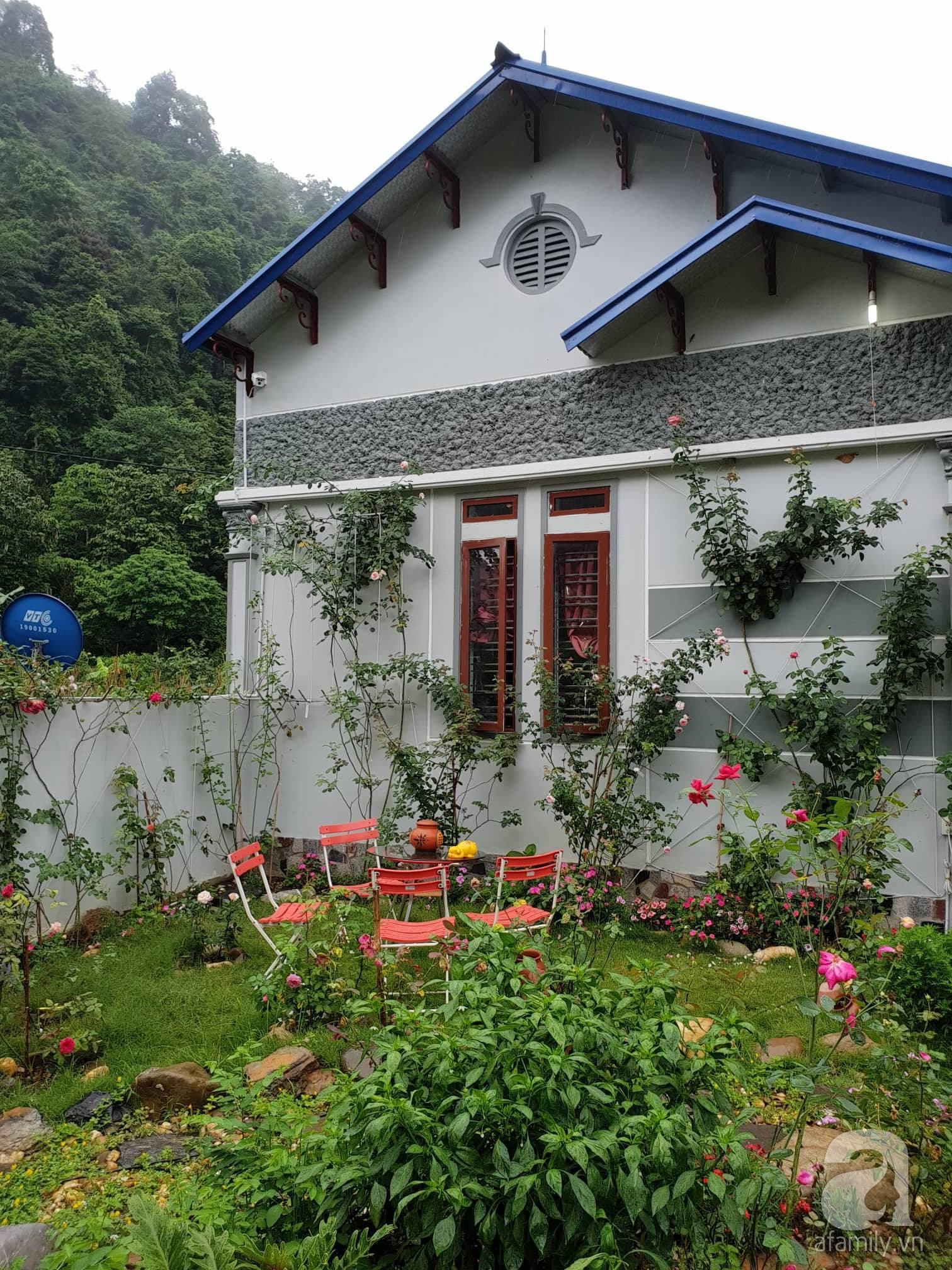 Ngôi nhà hoa hồng thơm ngát và rực rỡ với hàng trăm gốc hồng trên triền núi của cô giáo ở Cao Bằng - Ảnh 4.