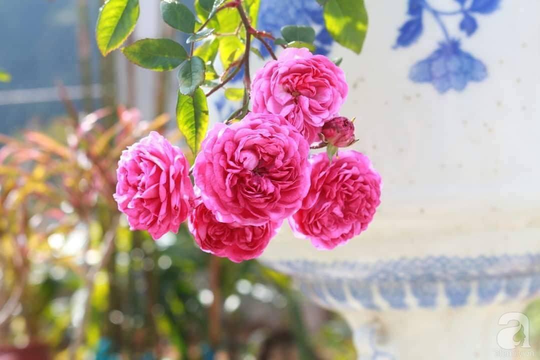 Ngôi nhà hoa hồng thơm ngát và rực rỡ với hàng trăm gốc hồng trên triền núi của cô giáo ở Cao Bằng - Ảnh 10.