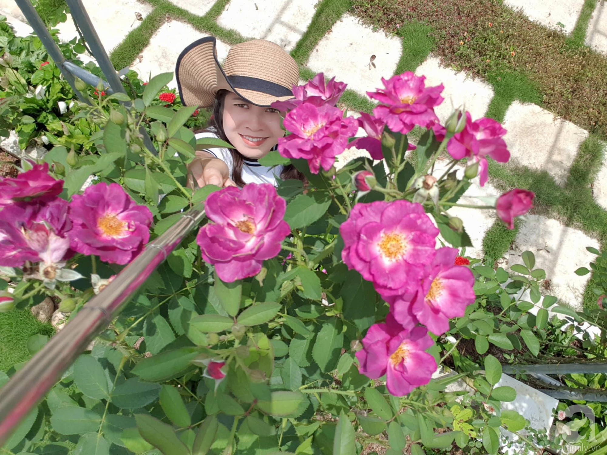 Ngôi nhà hoa hồng thơm ngát và rực rỡ với hàng trăm gốc hồng trên triền núi của cô giáo ở Cao Bằng - Ảnh 1.