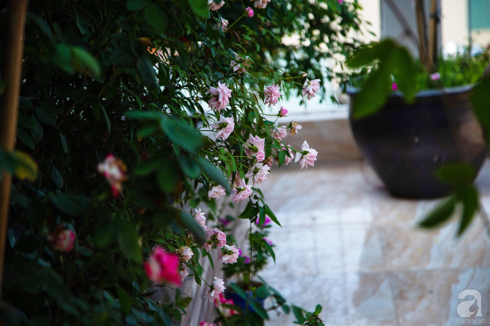 Khu vườn trên sân thượng rộng 200m² đẹp ngỡ ngàng với trăm loài hoa đua nhau khoe sắc ở Hà Nội - Ảnh 6.