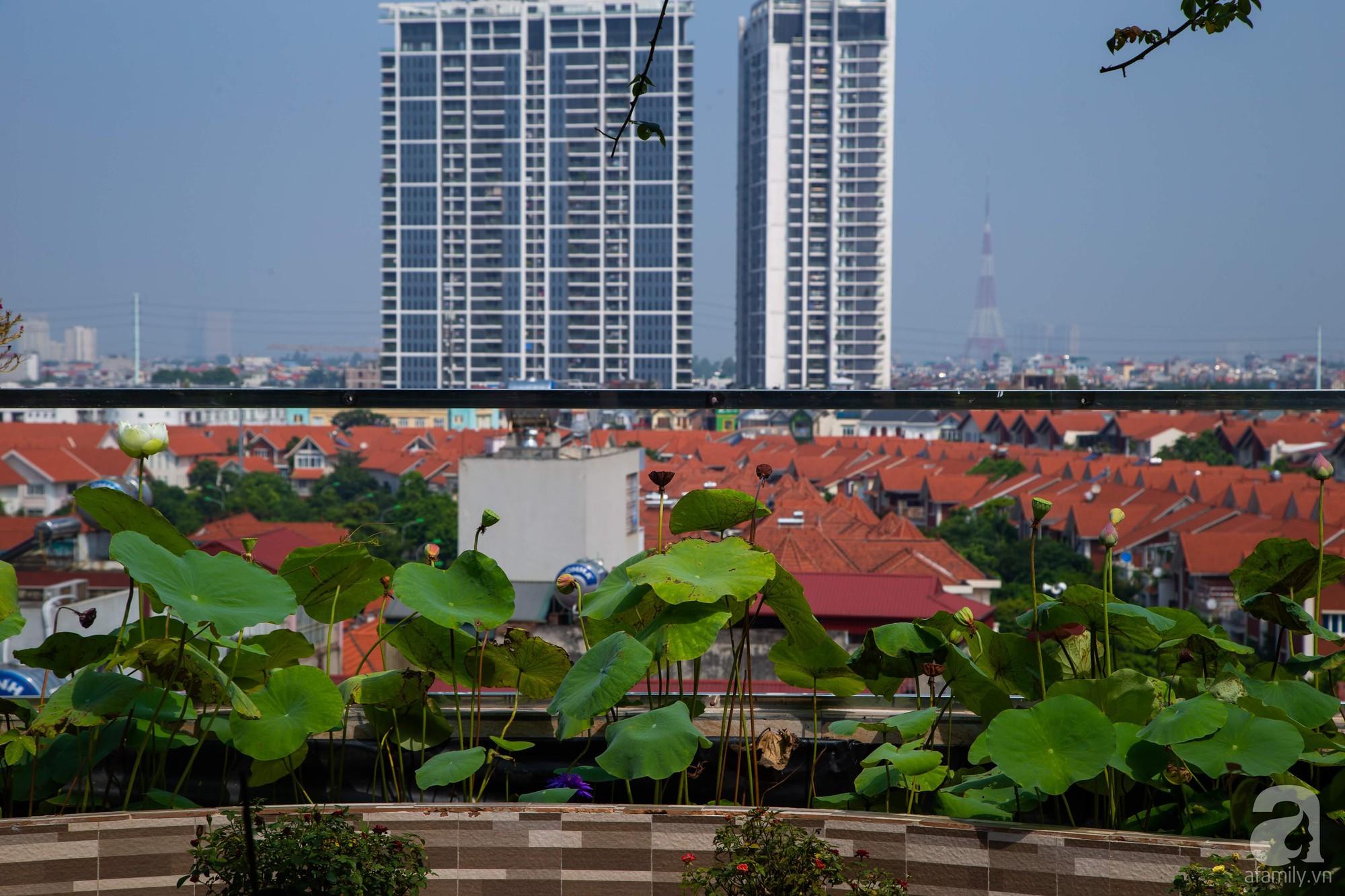 Khu vườn trên sân thượng rộng 200m² đẹp ngỡ ngàng với trăm loài hoa đua nhau khoe sắc ở Hà Nội - Ảnh 14.