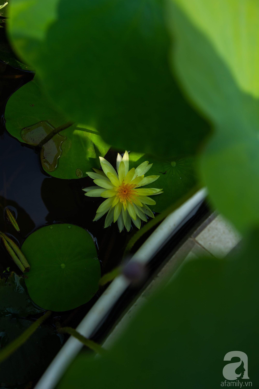 Khu vườn trên sân thượng rộng 200m² đẹp ngỡ ngàng với trăm loài hoa đua nhau khoe sắc ở Hà Nội - Ảnh 20.