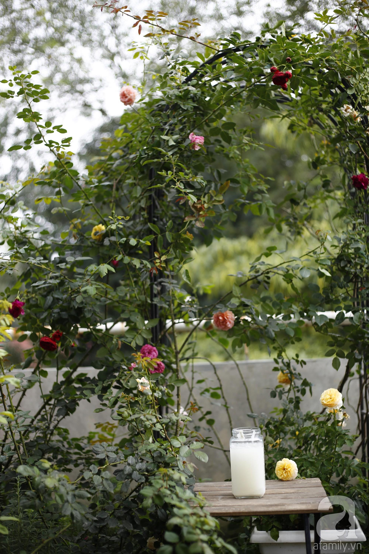 Khu vườn trên sân thượng vỏn vẹn 25m² nhưng có đủ thứ từ rau sạch đến hoa đẹp của bà mẹ trẻ ở Hà Nội - Ảnh 18.