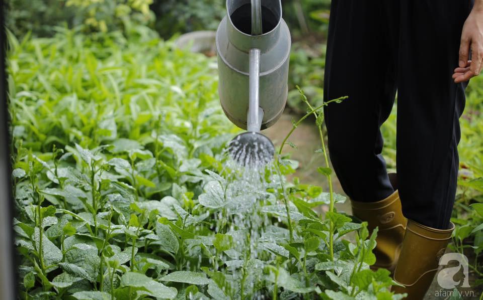 Khu vườn trên sân thượng vỏn vẹn 25m² nhưng có đủ thứ từ rau sạch đến hoa đẹp của bà mẹ trẻ ở Hà Nội - Ảnh 4.