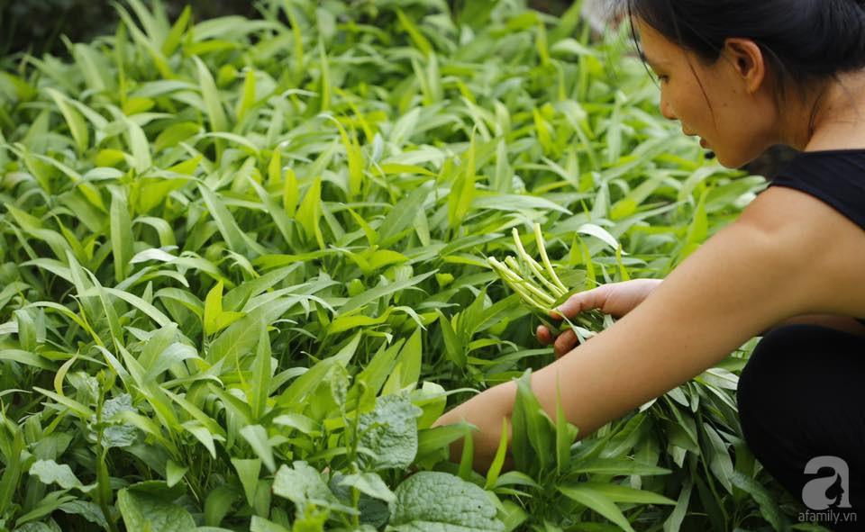Khu vườn trên sân thượng vỏn vẹn 25m² nhưng có đủ thứ từ rau sạch đến hoa đẹp của bà mẹ trẻ ở Hà Nội - Ảnh 2.