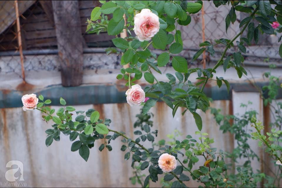 Khu vườn trên sân thượng vỏn vẹn 25m² nhưng có đủ thứ từ rau sạch đến hoa đẹp của bà mẹ trẻ ở Hà Nội - Ảnh 12.
