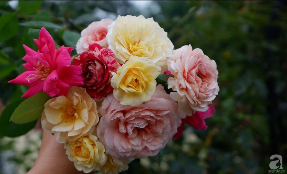 Khu vườn trên sân thượng vỏn vẹn 25m² nhưng có đủ thứ từ rau sạch đến hoa đẹp của bà mẹ trẻ ở Hà Nội - Ảnh 11.