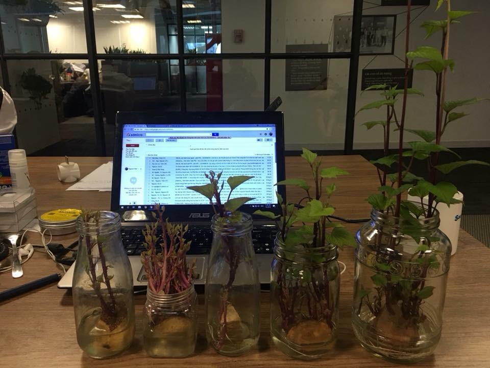 Bonsai củ khoai - hình thức tạo nên mảng xanh trong gia đình và công sở, vừa rẻ, vừa đẹp lại vô cùng độc đáo khiến MXH dậy sóng? - Ảnh 9.