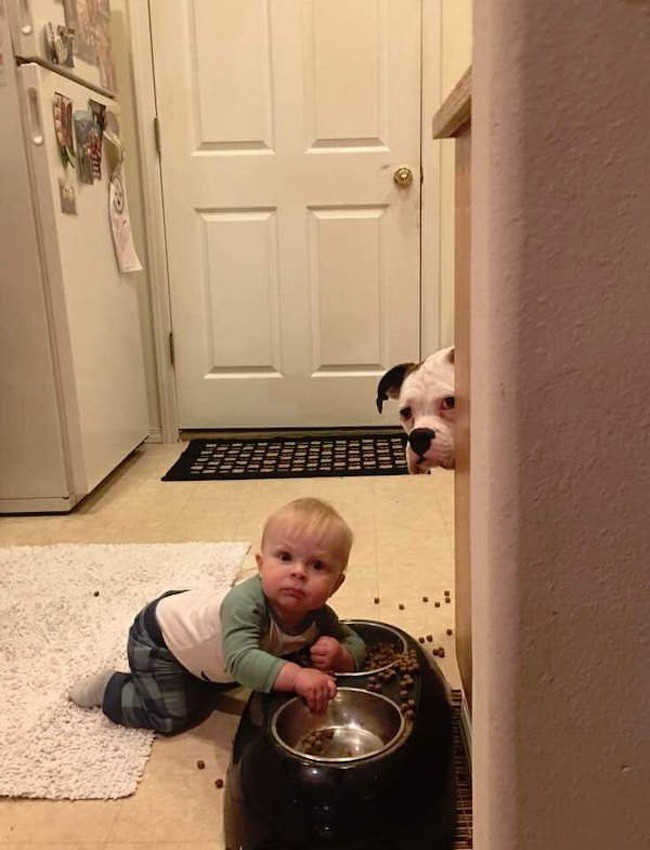Nếu không muốn rơi vào những tình huống dở khóc dở cười này thì đừng bao giờ để trẻ chơi một mình - Ảnh 9.