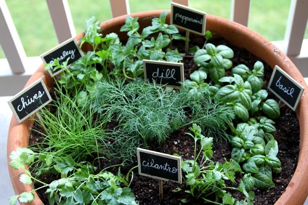 15 ý tưởng cho thấy chỗ nào trong nhà bạn cũng có thể trồng cây gia vị siêu xinh  - Ảnh 4.