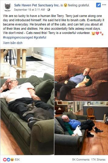 Đăng ảnh tình nguyện viên nằm ngủ say sưa cùng mèo, khu bảo trợ thú cưng nhận 1000 lượt truy cập mỗi phút, tiền tài trợ đủ cho cả năm - Ảnh 1.
