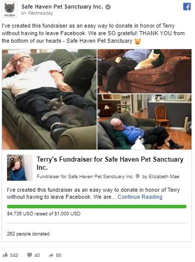 Đăng ảnh tình nguyện viên nằm ngủ say sưa cùng mèo, khu bảo trợ thú cưng nhận 1000 lượt truy cập mỗi phút, tiền tài trợ đủ cho cả năm - Ảnh 2.