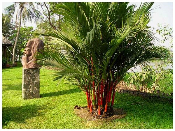 7 loại cây cảnh nếu trồng trước cửa nhà gia chủ có thể yên tâm hưởng phúc - Ảnh 1.