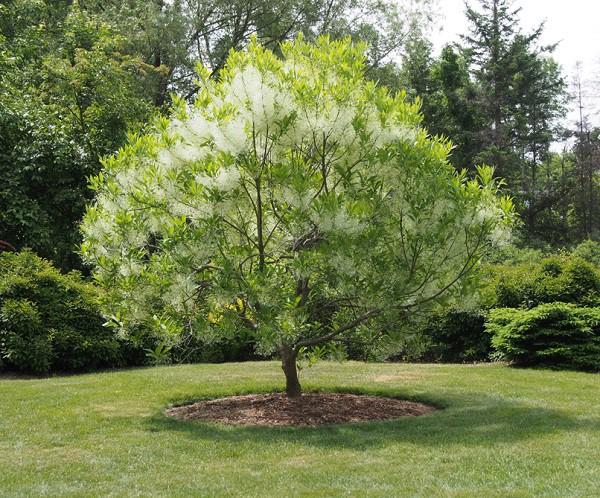 7 loại cây cảnh nếu trồng trước cửa nhà gia chủ có thể yên tâm hưởng phúc - Ảnh 4.