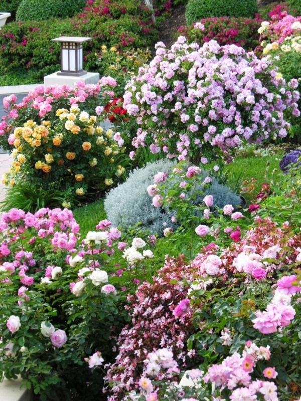 Rộn ràng hương sắc xuân trong sân vườn nhờ những ý tưởng làm đẹp sáng tạo - Ảnh 4.