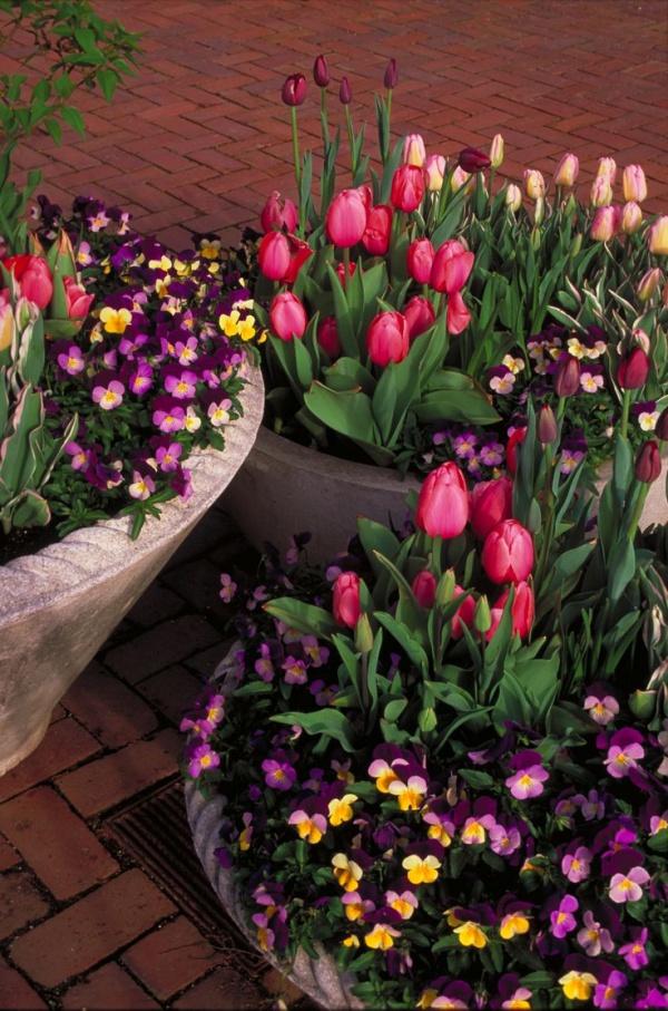 Rộn ràng hương sắc xuân trong sân vườn nhờ những ý tưởng làm đẹp sáng tạo - Ảnh 11.