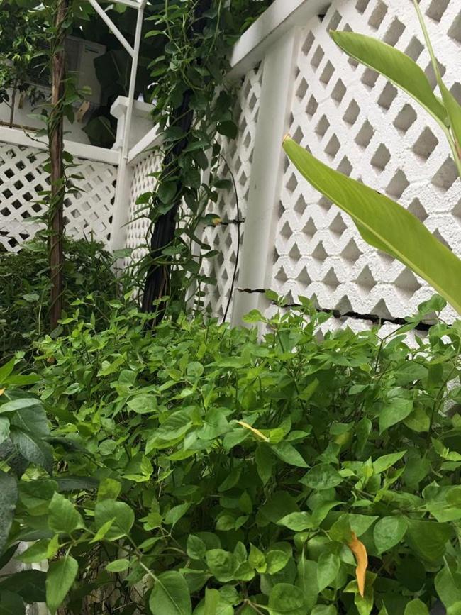 Biệt thự triệu đô ven sông với vườn rau xanh ngắt rộng đến 100m² của cặp vợ chồng hot nhất showbiz Việt: Thủy Tiên – Công Vinh - Ảnh 33.