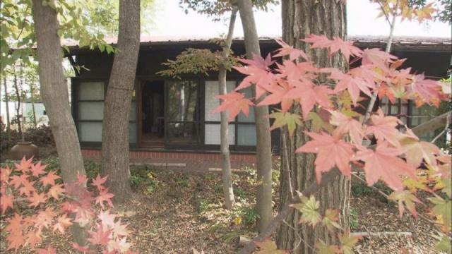 Cặp vợ chồng già bỏ phố về quê tận hưởng cuộc sống an nhàn bên ngôi nhà vườn rợp bóng cây xanh - Ảnh 6.