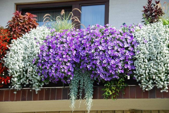 Ban công đẹp lung linh khi biết chọn những loài hoa này để trồng - Ảnh 1.