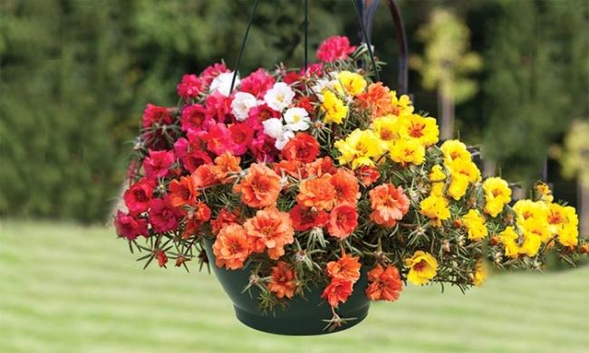 Ban công đẹp lung linh khi biết chọn những loài hoa này để trồng - Ảnh 5.
