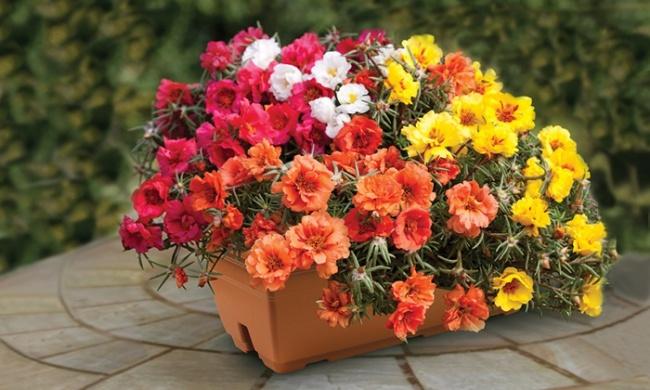 Ban công đẹp lung linh khi biết chọn những loài hoa này để trồng - Ảnh 6.