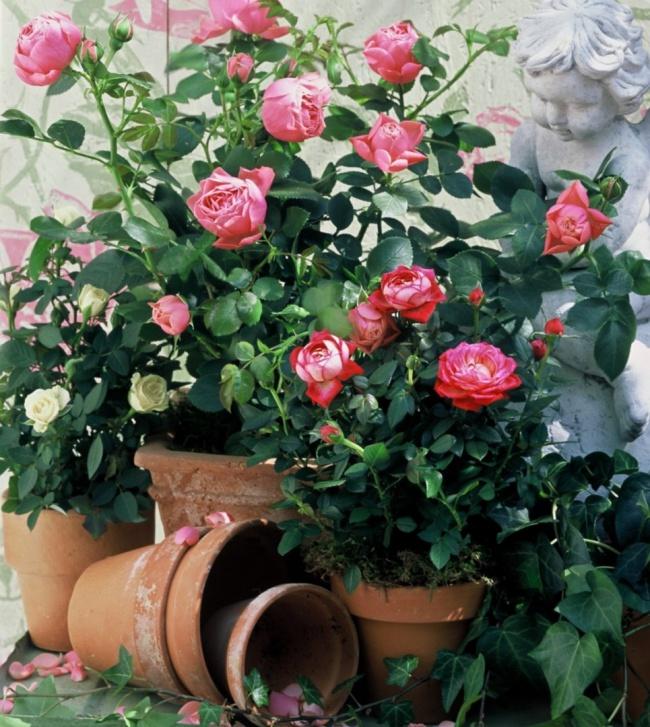 Ban công đẹp lung linh khi biết chọn những loài hoa này để trồng - Ảnh 8.