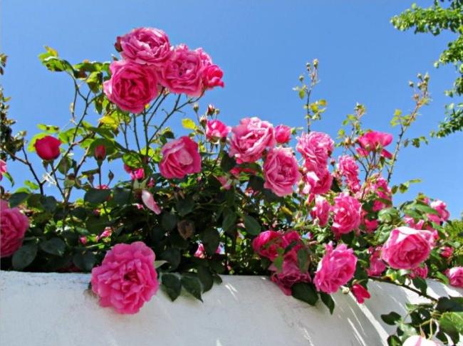 Ban công đẹp lung linh khi biết chọn những loài hoa này để trồng - Ảnh 9.