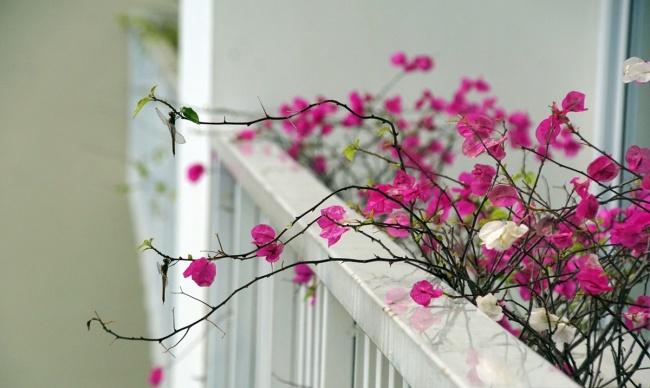 Ban công đẹp lung linh khi biết chọn những loài hoa này để trồng - Ảnh 12.