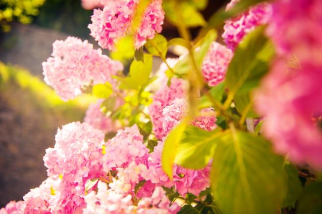 Ban công đẹp lung linh khi biết chọn những loài hoa này để trồng - Ảnh 14.