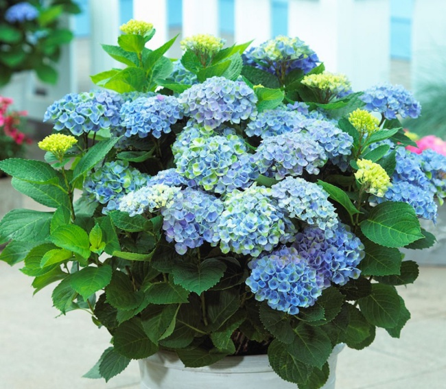 Ban công đẹp lung linh khi biết chọn những loài hoa này để trồng - Ảnh 15.
