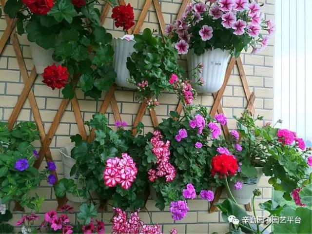 Ban công chỉ rộng vỏn vẹn 7m² nhưng tràn ngập hoa đẹp như cổ tích của bà mẹ bỉm sữa 2 con - Ảnh 9.