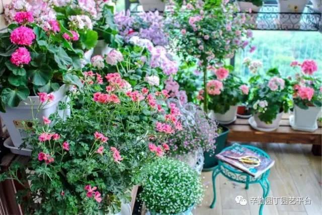Ban công chỉ rộng vỏn vẹn 7m² nhưng tràn ngập hoa đẹp như cổ tích của bà mẹ bỉm sữa 2 con - Ảnh 4.
