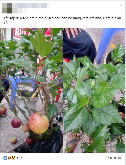 Cú lừa ngoạn mục ngày cận Tết: Mua chậu táo lùn về bày, ngờ đâu cây lại nở ra hoa dâm bụt - Ảnh 1.
