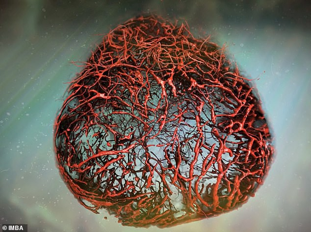 Nuôi thành công mạch máu người trong phòng thí nghiệm - bước đột phá đem lại hi vọng cho cả người tiểu đường - Ảnh 1.