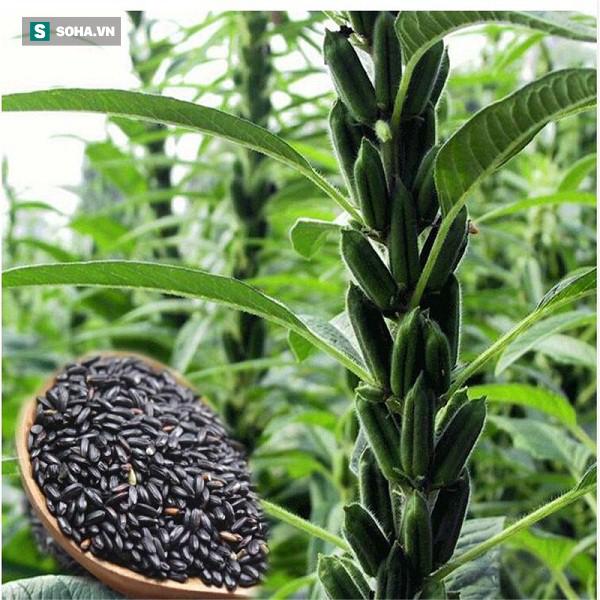 Loại hạt nhỏ chứa nhiều chất chống ung thư: Bạn vẫn ăn hàng ngày mà không biết - Ảnh 1.