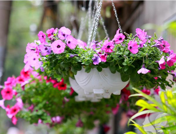 Mách bạn 10 loại cây trồng quanh nhà có khả năng xua đuổi kiến ba khoang hiệu quả - Ảnh 20.