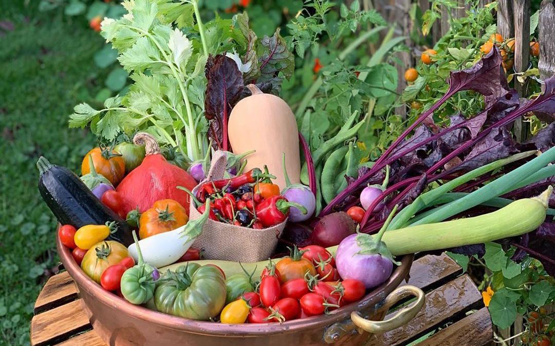 Vườn rau nhỏ tươi tốt với đủ loại rau của chàng trai 18 tuổi đam mê trồng trọt
