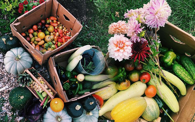 Ngắm khu vườn đẹp như tranh vẽ của cô gái 20 tuổi có niềm đam mê trồng trọt