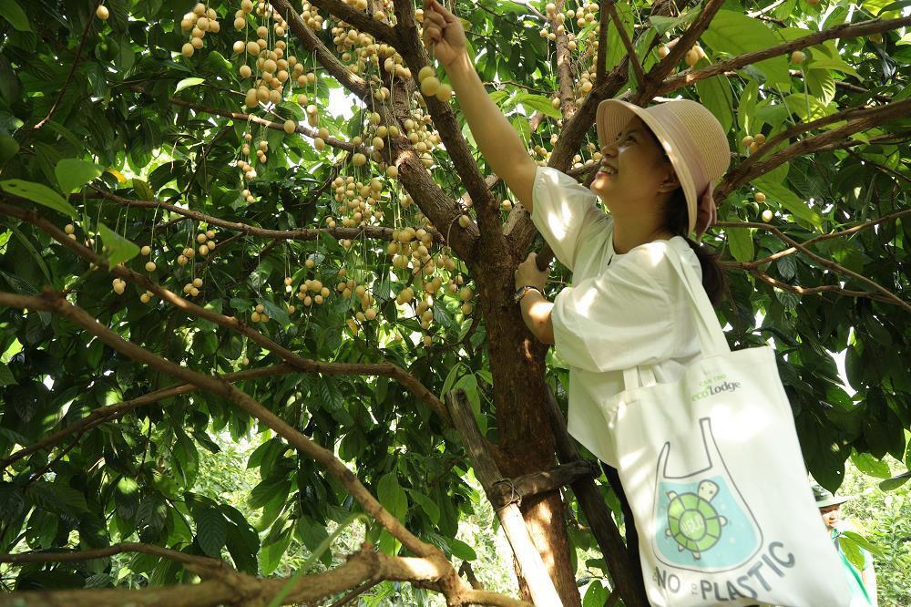Can Tho Ecolodge khu nghỉ dưỡng cuối tuần lý tưởng ngay gần Sài Gòn - Ảnh 4.
