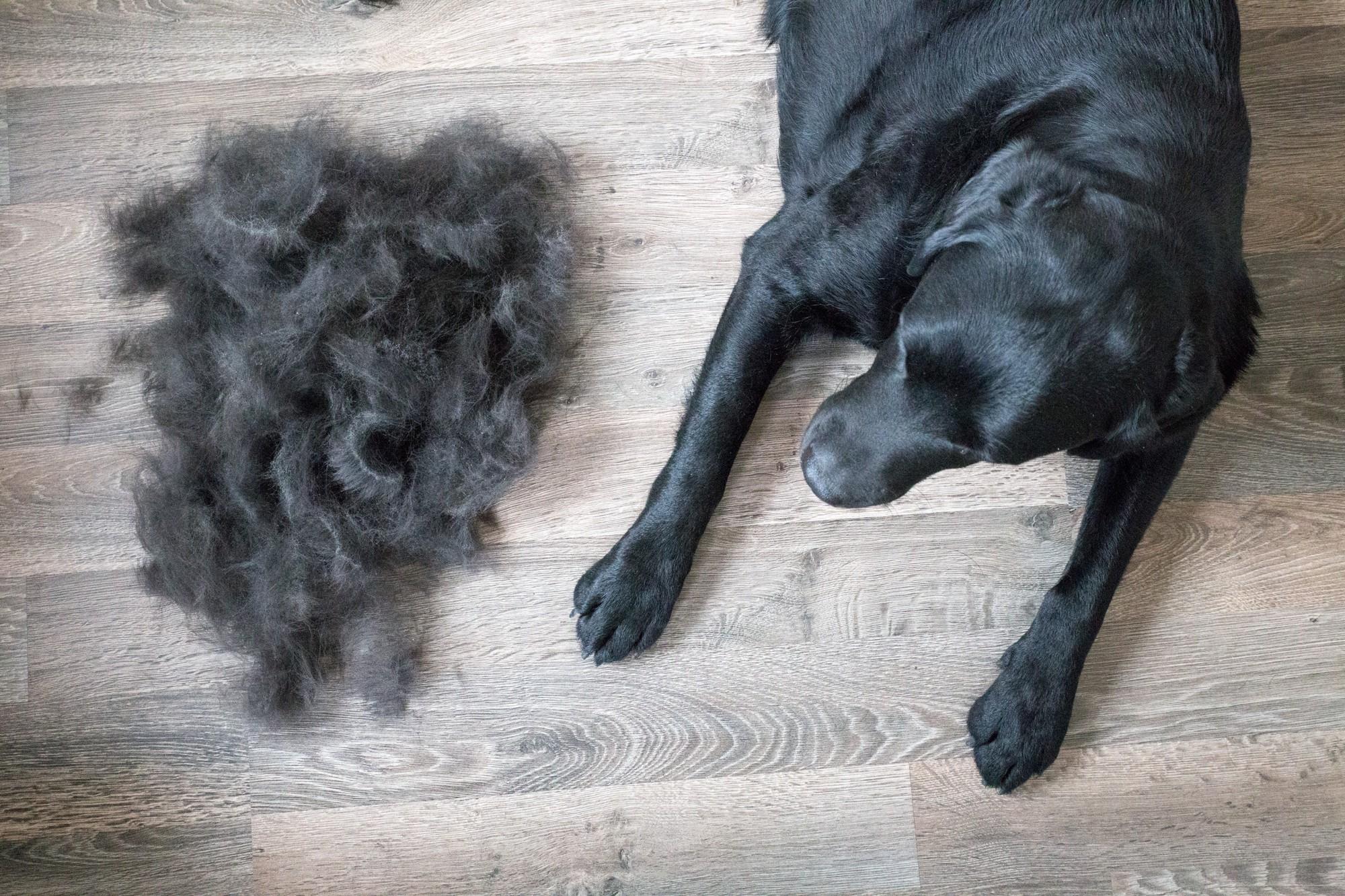 Gợi ý cho các con sen 9 dụng cụ loại bỏ lông thú cưng trong nhà, giúp không  gian sống luôn sạch sẽ