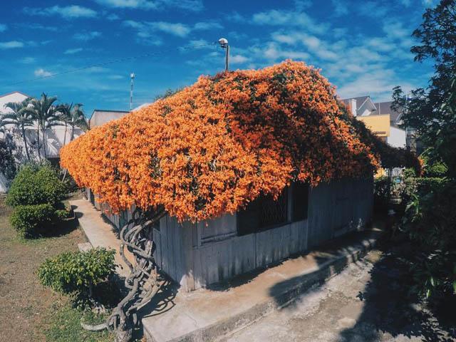 Hội chị em phát sốt đòi kéo nhau đi Lâm Đồng check in ở ngôi nhà phủ đầy hoa da cam như truyện cổ tích, từng lên cả báo Mỹ - Ảnh 1.