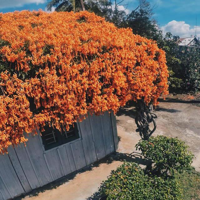 Hội chị em phát sốt đòi kéo nhau đi Lâm Đồng check in ở ngôi nhà phủ đầy hoa da cam như truyện cổ tích, từng lên cả báo Mỹ - Ảnh 4.