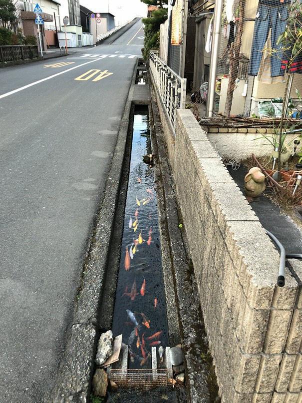 Cá koi bơi dưới cống, tận dụng nước rửa tay để xả bồn cầu và 22 sự thật thú vị về Nhật Bản thời hiện đại - Ảnh 16.