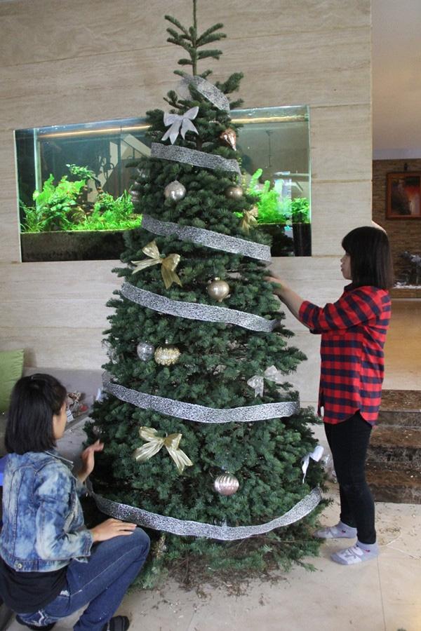 Giá chỉ từ 350.000 đồng, những cây thông Noel tươi đang hấp dẫn người tiêu dùng trong dịp Giáng sinh sắp đến - Ảnh 5.