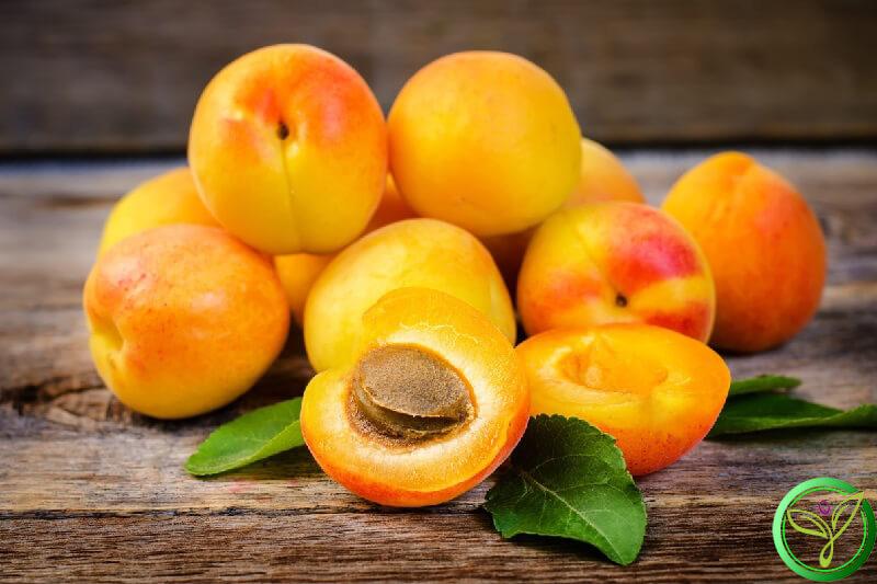"""Loại quả màu vàng nhiều người chê """"chua loét"""" hóa ra dùng để trị ho hay viêm họng, đau răng lại cực nhanh và tiện - Ảnh 6."""