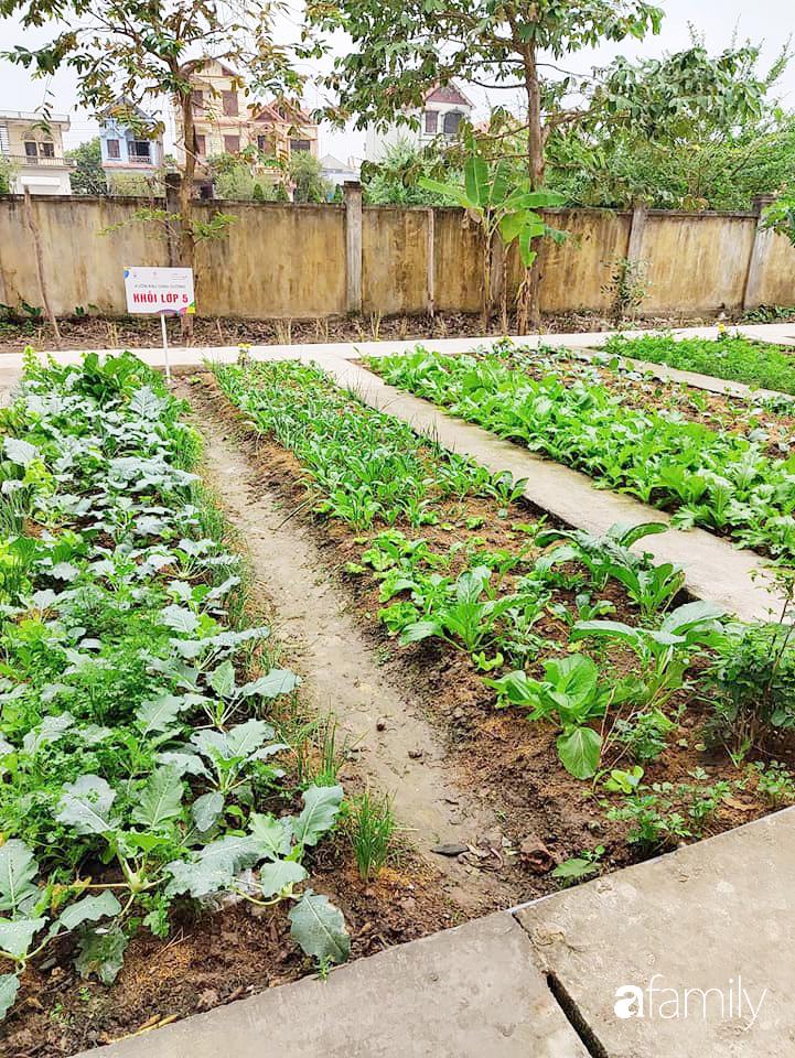 Vườn rau xanh ngát đủ loại cây trong các trường, cha mẹ nhìn vào cũng phải mê tít - Ảnh 2.