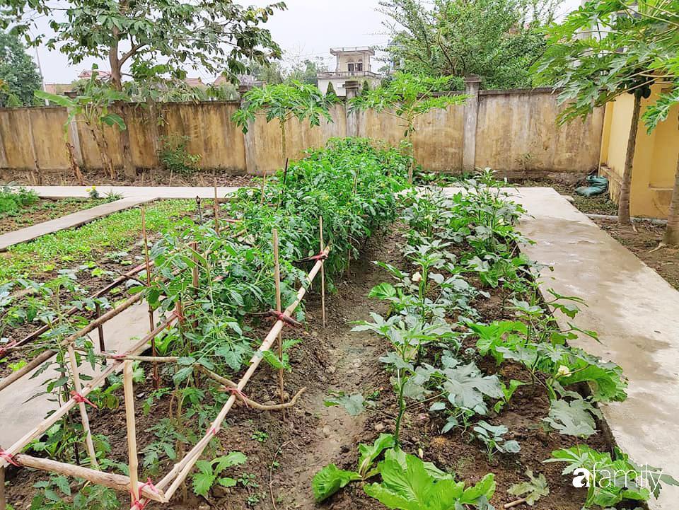 Vườn rau xanh ngát đủ loại cây trong các trường, cha mẹ nhìn vào cũng phải mê tít - Ảnh 5.