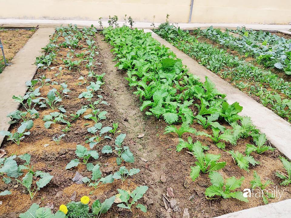 Vườn rau xanh ngát đủ loại cây trong các trường, cha mẹ nhìn vào cũng phải mê tít - Ảnh 6.