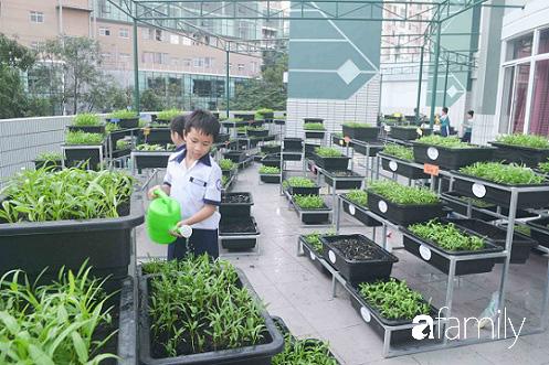 Vườn rau xanh ngát đủ loại cây trong các trường, cha mẹ nhìn vào cũng phải mê tít - Ảnh 7.