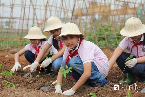 Vườn rau xanh ngát đủ loại cây trong các trường, cha mẹ nhìn vào cũng phải mê tít - Ảnh 10.